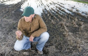 tell us about what you were able to harvest and details of any crops that were grazed or sprayed out.